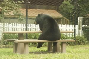 медведь грустит